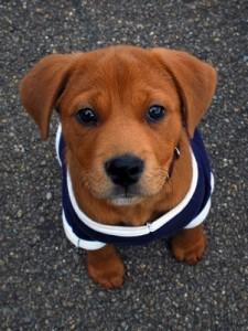 cute-puppy-shirt-225x300
